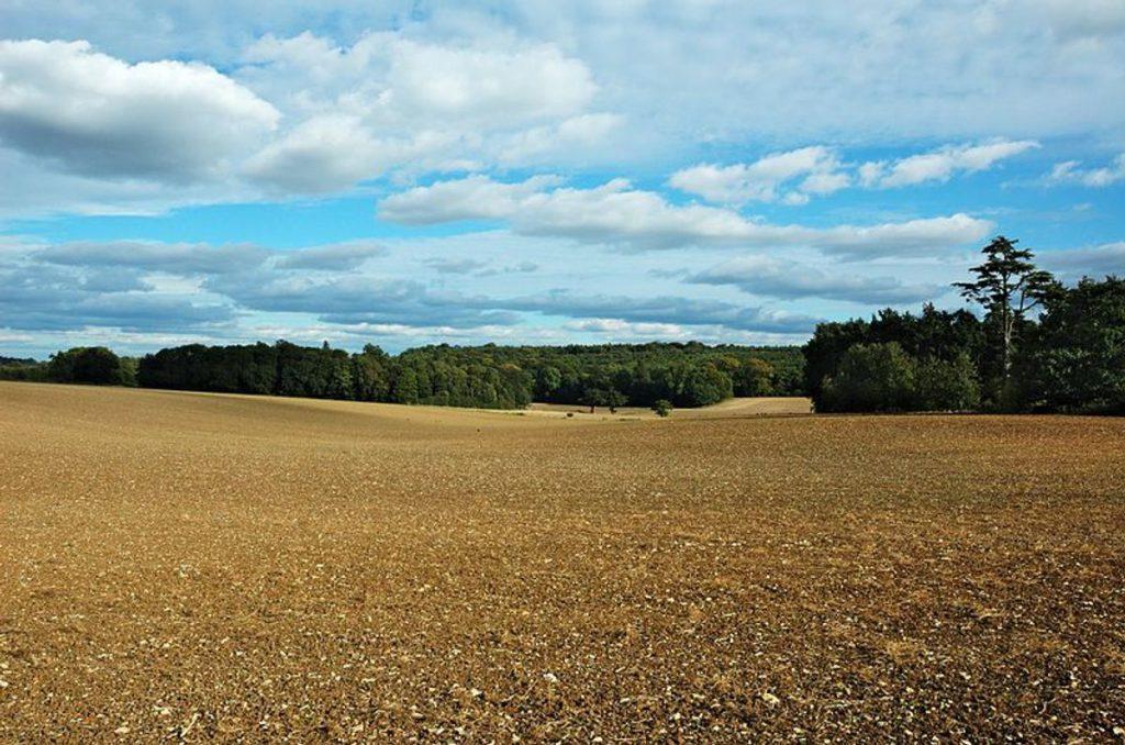 Gary Houston Fields and woods in the Gorhambury Estate
